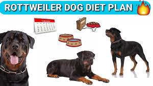 Rottweiler Puppy Diet Chart Rottweiler Diet Plan In Hindi Rottweiler Diet Chart