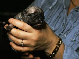 milk is the key to optimal health in a newborn puppy s life