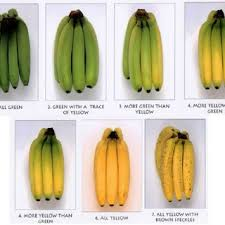 Gourd Identification Chart Color Chart Of Banana Fruits In Various Stages Download