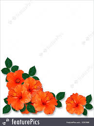 hibiscus flowers templates tropical hibiscus flowers background stock illustration