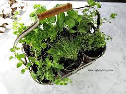 indoor herb garden kit. DIY Indoor Herb Garden Kit