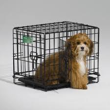 Midwest Icrate Size Breed Chart Midwest Icrate Folding Double Door Dog Crate