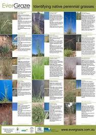 Native Grasses Identification Poster Farmstyle Australia