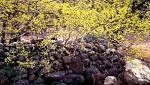 https://www.newsday.com/lifestyle/columnists/jessica-damiano/march-gardening-chores-calendar-1.16922301