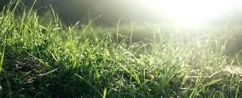 Lowes Herbicide Smartermedia Co