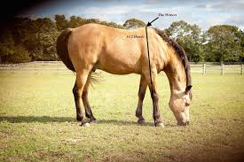Average Horse Height How Big Do They Get With Size Chart