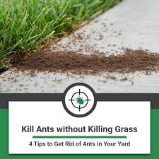 kill ants without killing grass 4 tips to get rid of ants out of your yard