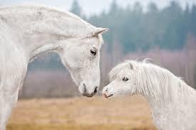 Die 22 Schönsten Pferde Sprüche Ponymag