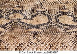 Python Pattern Interesting Python Snake Skin Pattern