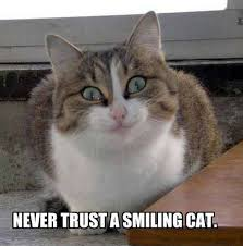 Smiling Kitties on Pinterest | Smiling Cat, Cats Humor and Cute Quotes via Relatably.com