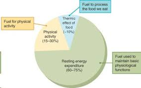 Energy Expenditure Chart For Activity Energy Expenditure How We Use Calories