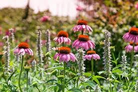 Wildflower Garden Design Impressive Top Perennial Plants For Wildflower Meadows