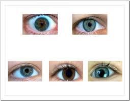 Hazel Eye Chart Salabencher Eye Color