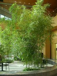 Small Picture Download Bamboo Garden Design Solidaria Garden