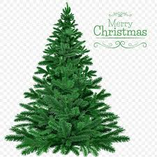 You can download and print the best transparent christmas tree png collection for free. Merry Christmas Tree Png Image Free Download Searchpng Com
