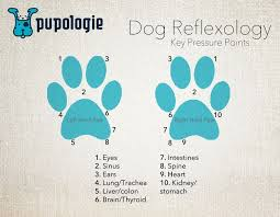 Dog Reflexology Key Pressure Points A Simple Foot Chart