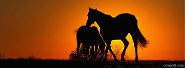 wild horses sunset. Perfect Horses Wild Horses Silhouette At Sunset Inside