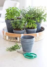 indoor herb garden small potted plants