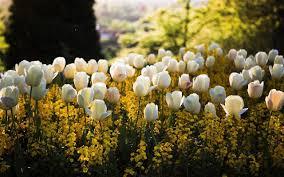 نتیجه تصویری برای عکس گل های زیبا همه رنگ در ایران