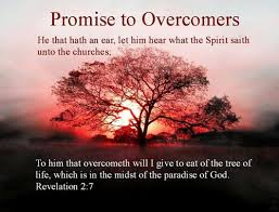 Image result for overcomers pictures