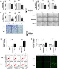 Tumor Suppressive Microrna 223 Targets Wdr62 Directly In