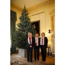 15ft - 20ft Christmas Trees