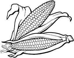 Small Picture Thanksgiving Coloring Pages Corn Holidays Coloring pages of