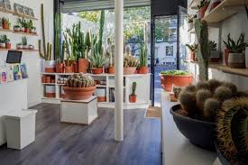 Whether this be restaurants, bakers or coffee shops, there are a lot of options of businesses for sale for. Where To Buy Houseplants In The Uk Jane Perrone