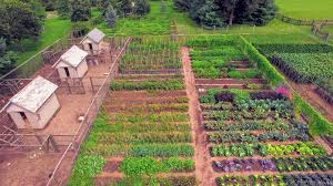 after two weeks in maine i was eager to visit my gardens back at my bedford farm here is a drone s view of my vegetable garden