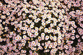 Floral Tumblr Desktop Wallpapers - Top ...
