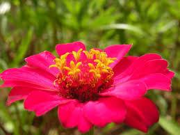 Resultado de imagem para flor delicada
