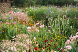 guide to wildflower gardens