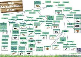Invertebrate Identification Chart Insect Bug Spotting Grow Wild