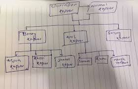 How Is Anil Kapoor Related To Raj Kapoor Quora