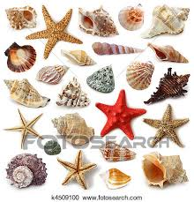 Seashell Collection Stock Image K4509100 Fotosearch