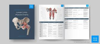 Kinesiology Muscle Chart Muscle Anatomy Reference Charts Free Pdf Download Kenhub