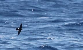 תוצאת תמונה עבור לב ים
