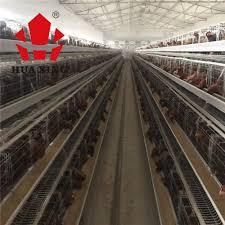 Poultry Farm Design Uganda Poultry Farm Design Layer Chicken Cages Buy Design Layer Chicken Cage Uganda Poultry Farm Layer Chicken Cage Layer Chicken Battery