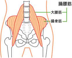 寝返りで激痛の「急性腰痛」⇒「腸腰筋」の施術で改善!/さいたま市岩槻区の40代女性 | 古川カイロプラクティックセンターさいたま整体院