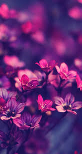 Purple Flowers Backgrounds Pink And Purple Flowers Purple Flowers Wallpaper Flower