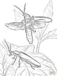 Small Picture adult firefly coloring page firefly insect coloring page blaze