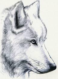 white wolf howling drawing. Beautiful Wolf White Wolf Howling Drawing  Photo3 For Wolf Howling Drawing G
