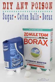 borax for ant control. Delighful For Poison Ants DIY  I Wish Had Learned About This Years Ago Itu0027s Cheap For Borax Ant Control U