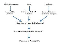 Cholesterol Lowering Drugs Endotext Ncbi Bookshelf