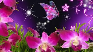 to flower wallpapers desktop background flower wallpaper hd
