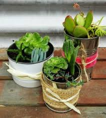 12 DIY Plant Gift Ideas For Christmas  The Bright Ideas BlogChristmas Gift Plants