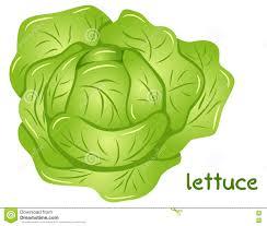lettuce clipart. Perfect Lettuce Lettuce Clipart Lettuce Plant Jpg Transparent Stock For Clipart C