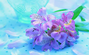 beautiful fresh flowers violet nature