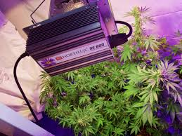 Hortilux Se 600 Grow Light System Hortilux Gives Us A New Generation Of Marijuana Grow Lights