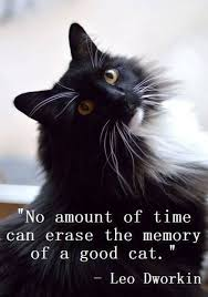 My Beautiful Cat Quotes